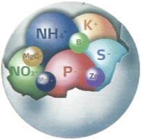 YaraMila-Complex-Diagram-Molecule